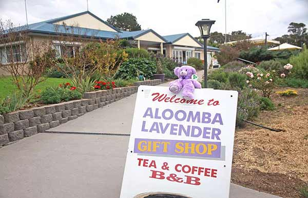 Lavender australia stanthorpe accommodation oil and Gifts